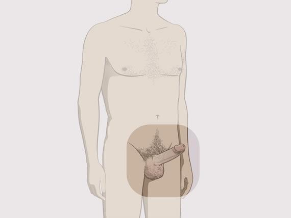 exerciții de întărire a erecției