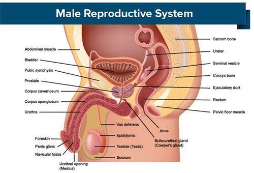 erecție slabă după 55 de ani ce să faci dacă penisul nu este același