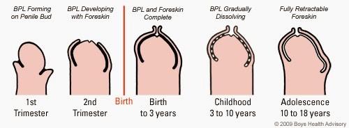 mărirea penisului prin tensiune