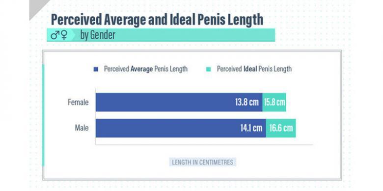 diametru ideal al penisului