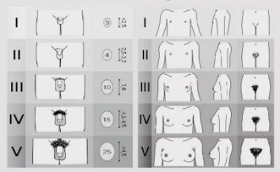 Mărimea ideală a penisului – Forța masculină