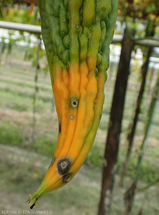 ce legume sporesc erecția când se pierde o erecție