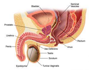 puncte în jurul penisului