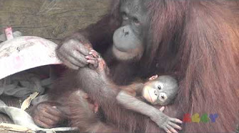 Mujer con orangután