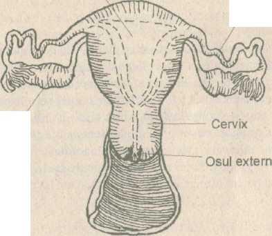 aerarea măririi penisului penis mascul cel mai mic