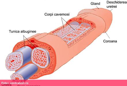 prostatită cronică și erecție slabă exerciții de întărire a erecției