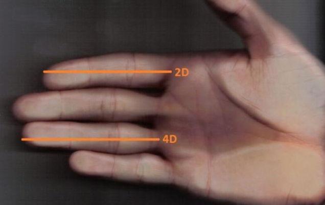 măsurarea dimensiunilor penisului întărește și prelungește erecția