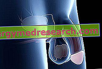 Ecografia penisului cu erectie artificiala (necesita Caverject)