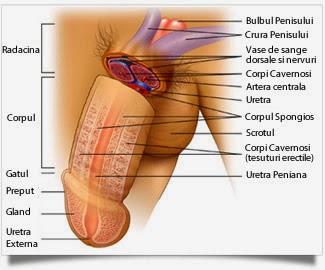 schema de penetrare a penisului senzație de amorțeală în penis