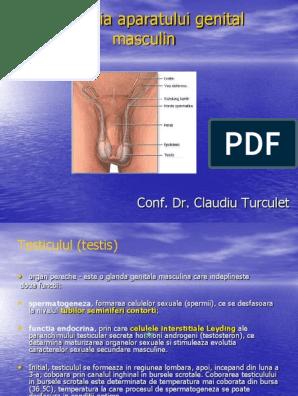 celulele masculine ale penisului vârsta la care se oprește erecția de dimineață