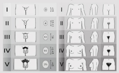 penisuri masculine de dimensiuni mari