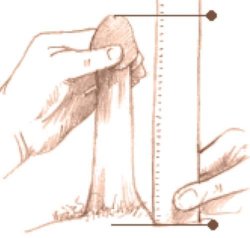 care ar trebui să fie lățimea penisului care este forma penisului