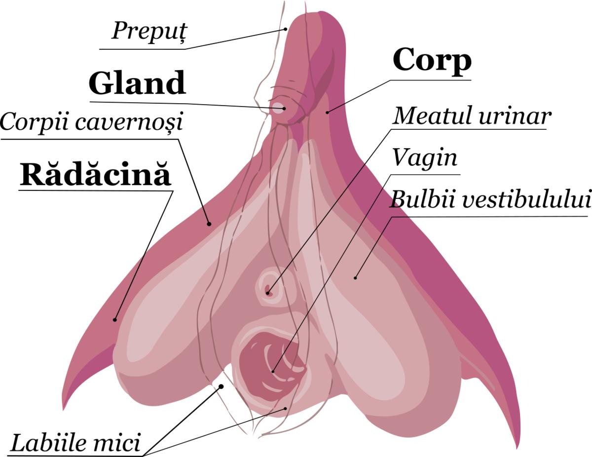 cum se manifestă o erecție la fete
