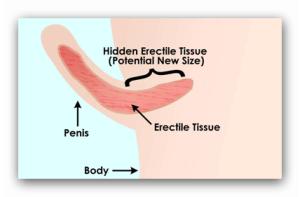 prelungitoare de alungire a penisului