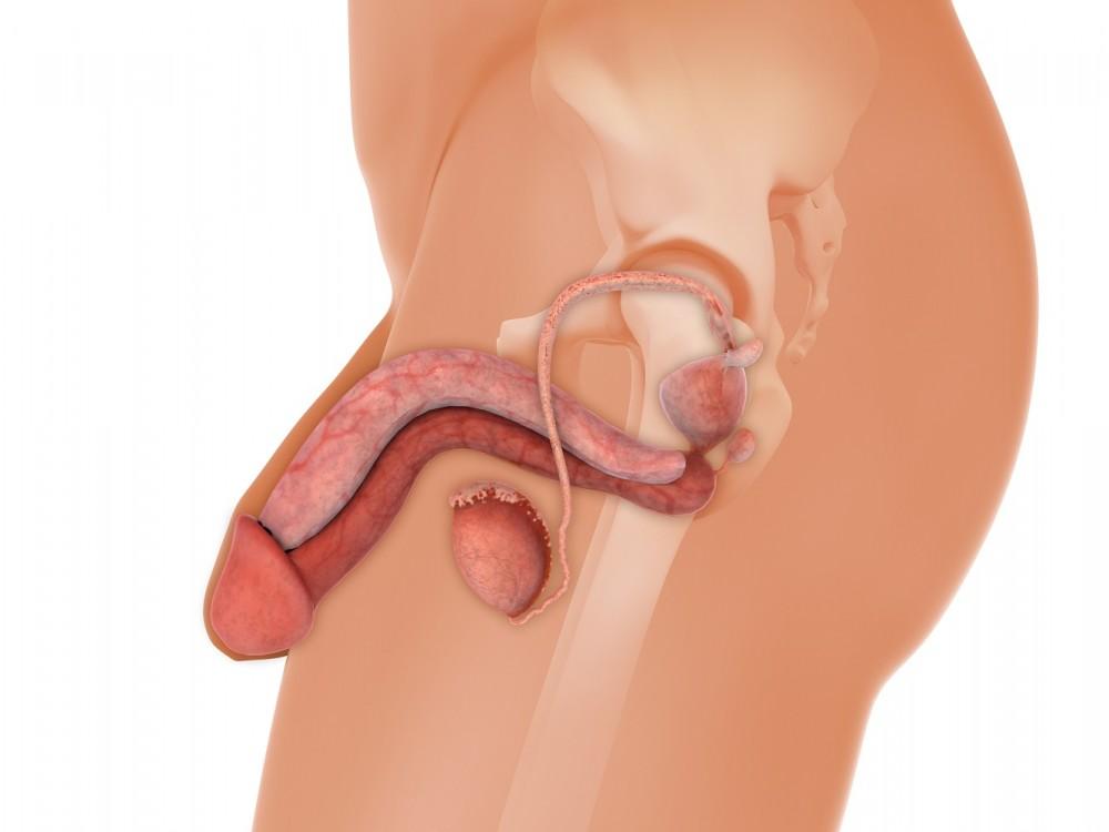 penis lipit ce produse pentru erecție