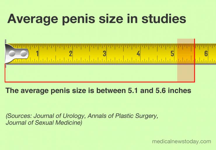 penis mediu