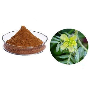Ceaiurile cu efect de Viagra. Care sunt plantele care stimulează potenţa   messia.ro