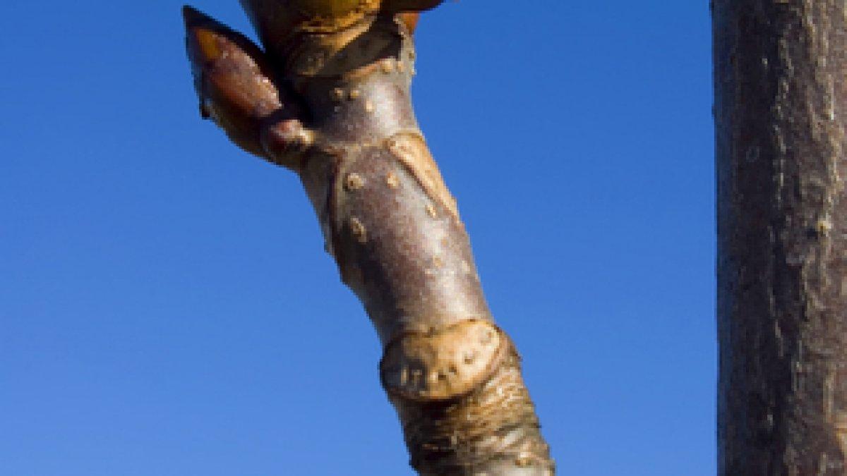 monstru uriaș al penisului cum și cum să mărești o erecție
