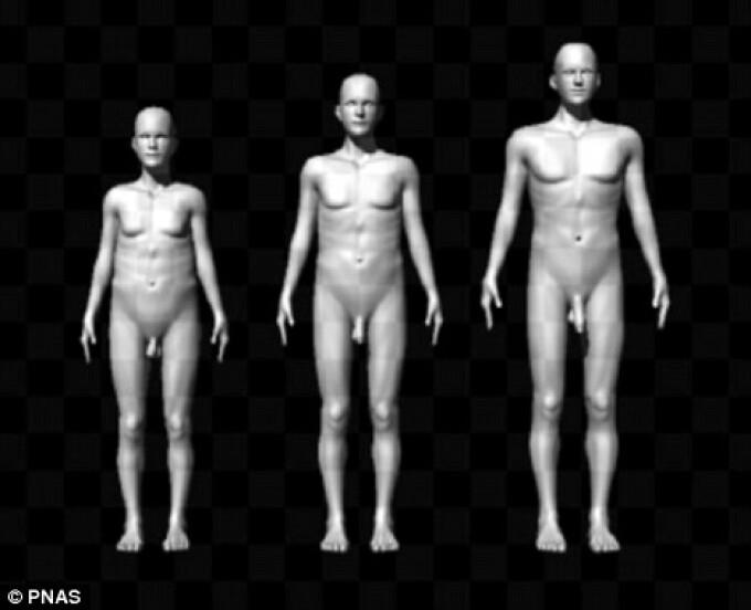 Dimensiunea medie a unui penis si alte lucruri interesante • Educație Sexuală