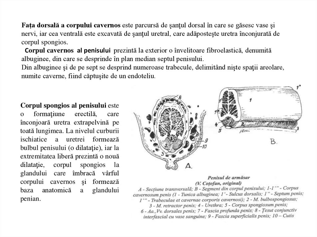 Recunoașterea și tratarea fracturii penite