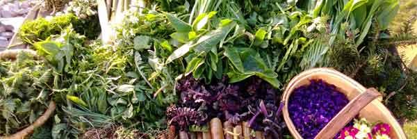 ce legume sporesc erecția
