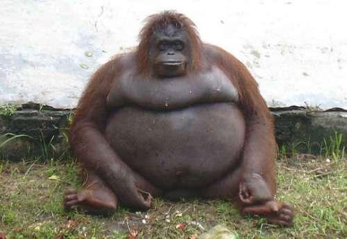 Mujer con orangután filme porno